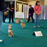 Aktivitetsdag i Hundhall